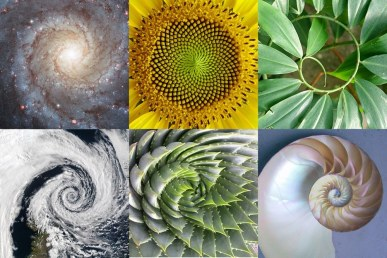 Golden Ratio Emergence