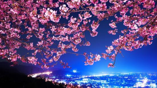 cherry_blossom_city_night_lights