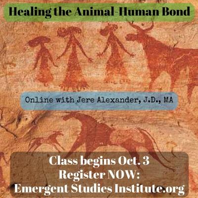 healing-the-animal-human-bond