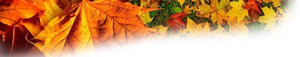 leaves_banner